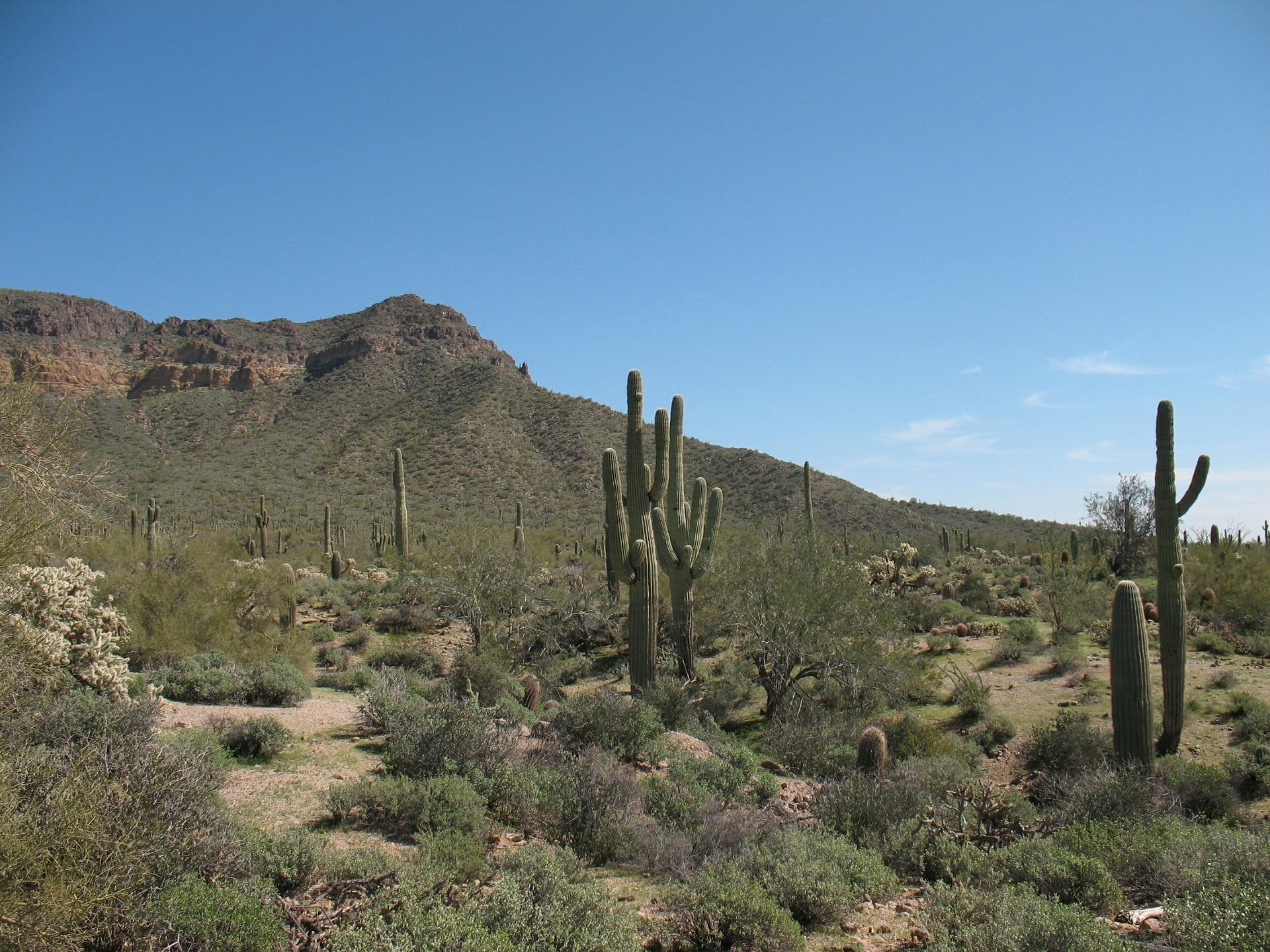 desert-417039_1920